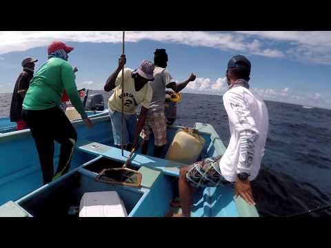 A LA VIVE FISHING  Traditional KING FISH HANDLINE FISHING  The PREVIEW
