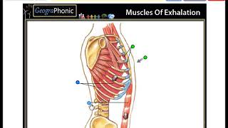 muscles of exhalation,  direction of Chest movement, thorax, breath ,medical game run