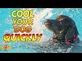 How to Cool a Dog Down Quickly (and save their life) | Hot weather dog care pt 4