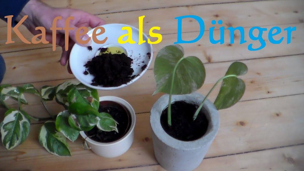 kaffeesatz d nger f r zimmerpflanzen umweltfreundlicher d nger f r pflanzen gartenpflanzen