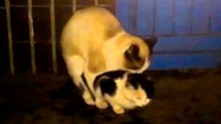 Кошки ХХХ