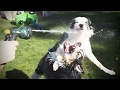 Dogs vs Water 💕 Who wins? [Funny Pets]