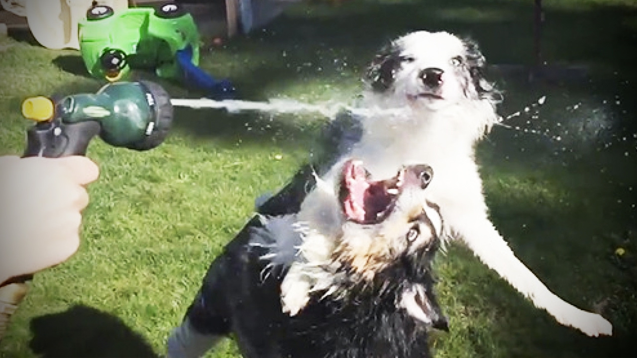 Dogs vs Water ???? Who wins? [Funny Pets]
