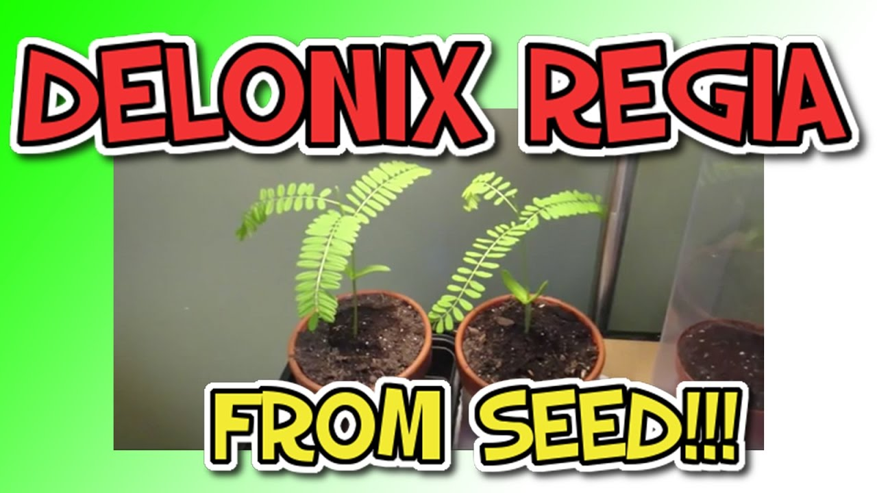 how to start a bonsai tree from seed