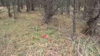 Грибы в Германии - Белые грибы и мухоморы(I created this video with the YouTube Video Editor (http://www.youtube.com/editor), 2012-10-08T18:17:24.000Z)
