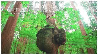 【上小阿仁村】 上大内沢自然公園観察教育林