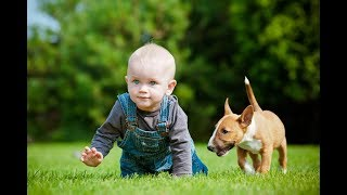 Baby Playing With Toys and Pet II Funniest Babies Funny Video You Must Enjoy