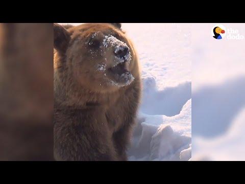 Rescue Bears Take On Snowmen