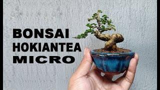 Ganti Pot Bonsai Mini Bahan Hokiantea Buah