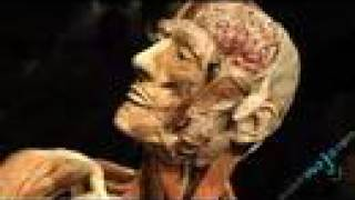 Body Worlds Exposition: Part 1