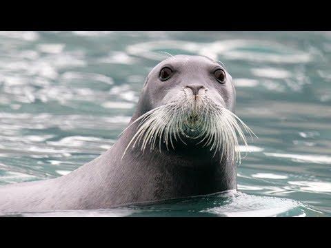 Scientists Need Your Help Finding Seals In Antarctica