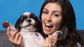 People Get Professional Photos With Their Pets
