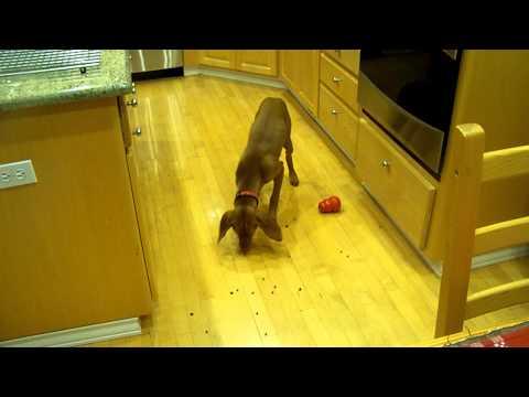 Clean Kitchen Floor.MOV