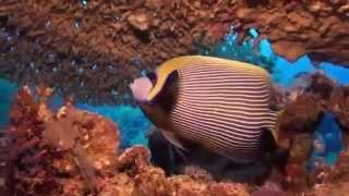 Отдых в Египте. Дайвинг. Красота подводного мира.(http://goo.gl/BQLMVk В Египте Красное море является идеальным местом для дайвинга. Красота подводного мира поражает!, 2014-11-20T21:09:33.000Z)