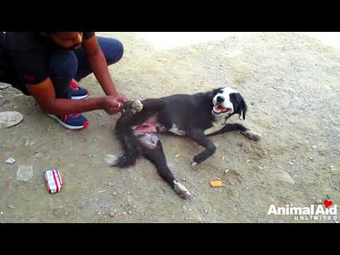 Stomach torn open and organs exposed, Rani's incredible recovery.