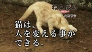 『ねこばん』第10回―猫は、人を変える事ができる。 2010年10月スタート...