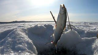 Коротко о сегодняшней Зимней рыбалке