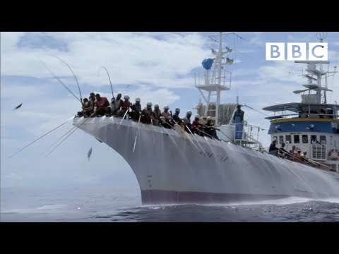 HD: Tuna Fishing - South Pacific - BBC Two