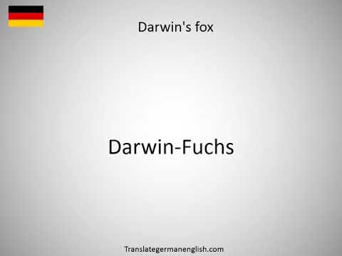 How to say Darwinius in German?