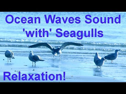 The Sound Of Ocean Sea Waves & Birds - 2 Hours Of Relaxation!