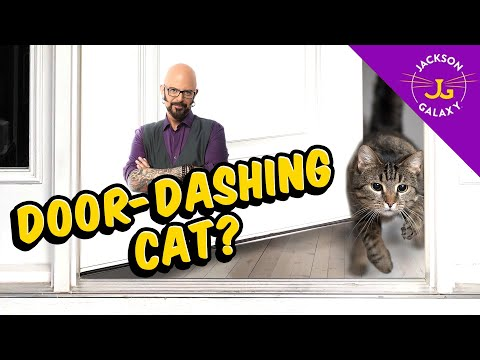 Tips On Helping Prevent Door-Dashing Cats!