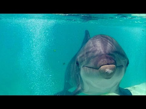 The untold story of the Katrina Dolphins - from Gulfport to Atlantis