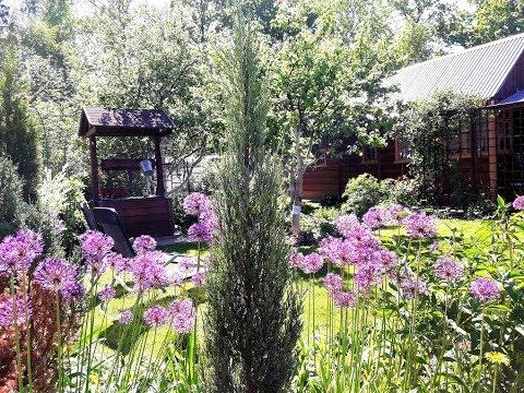Наша дача 26 мая - сад , огород и сюрприз от мужа.