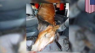 Dziwny wypadek: samochód uderza w konia. Kierowca i zwierzę nie żyją.