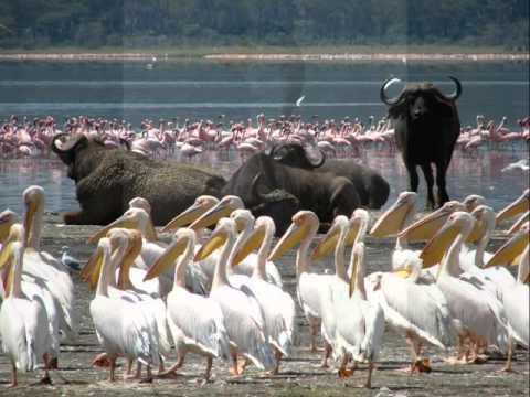 A tour to Lake Nakuru National Park