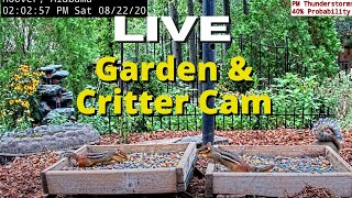 Preview of stream LIVE Garden and Bird Cam in Alabama (over 45+ Species at Feeder Station)