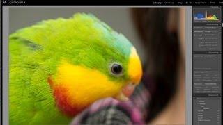 36mp Nikon D800 - file size, storage and processor demand