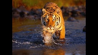 ANIMALS |  Most Amazing Animals Videos | zoo  animals  -aks media
