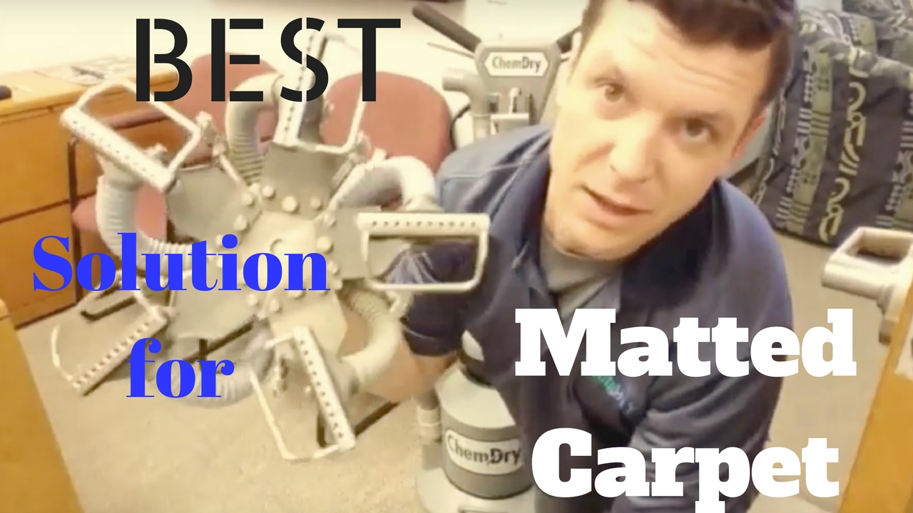 Mattedcarpet Petstains Carpetcleaning