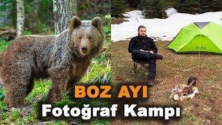 Boz Ayı Fotoğraf Kampı - Grizzly Bear Photo Camp