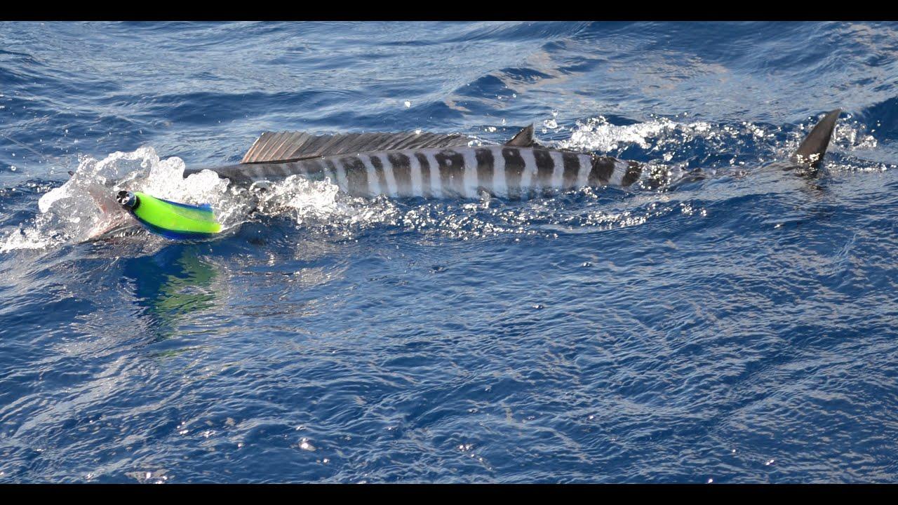 Deep sea fishing mauritius big game fishing queen youtube for Big 5 fishing license