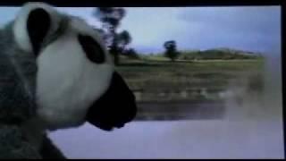 lemur rides bike