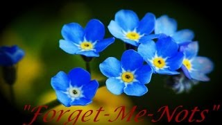"""Download """"Forget-Me-Nots"""""""