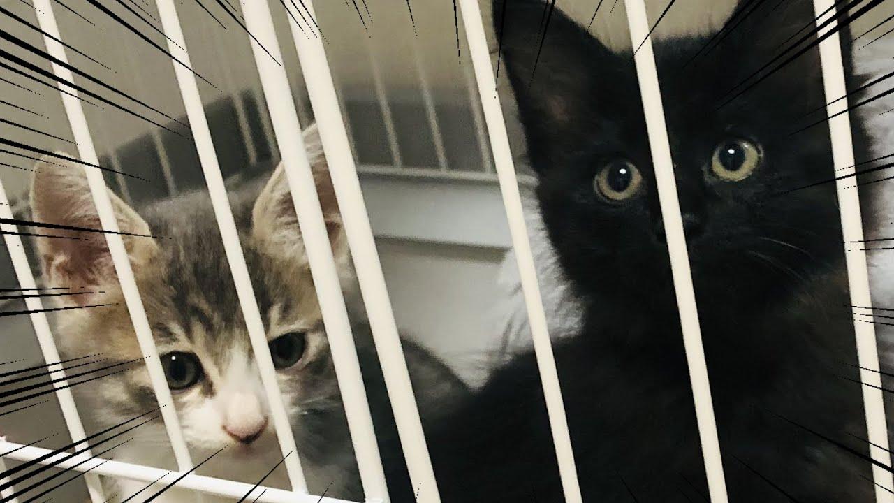 2匹の猫と暮らすことになった男