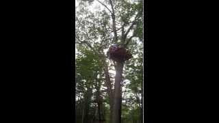 Peter - Tarzan Swing, Treetop Trekking in Huntsville, Ontario