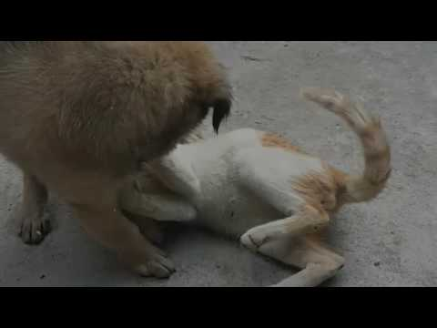 Dog vs Cat fight to the finish