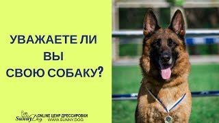 Уважаете ли вы свою собаку? О любви к собаке. Люблю свою собаку.