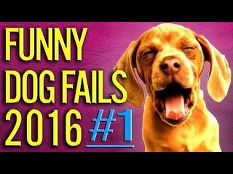 TRY NOT TO LAUGH or GRIN - Funny Kids Fails Compilation 2016 Part 8 by Life Awesome