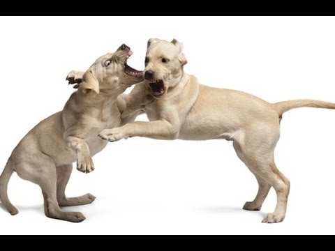How to stop dog aggression towards other dogs