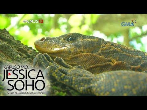 Kapuso Mo, Jessica Soho: Mga bayawak, sumasalakay sa Maguindanao?