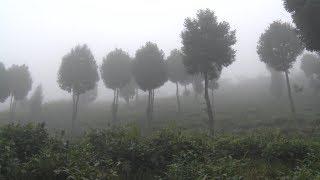 Chinh phục đất hoang thành rừng pơ mu, sa mu trên mù mây