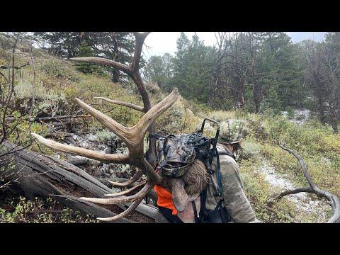 Big Bull Down, Utah Limited Entry Bull Elk Hunt 2021