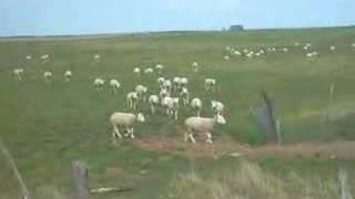 Mouton de panurge...