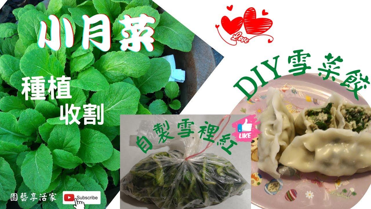 手工蔬食養生水餃~ 料多味美 雪菜餃 - YouTube
