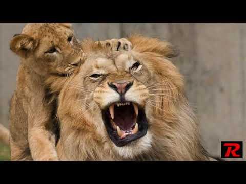 Christopher Walden - The Lion Speech...