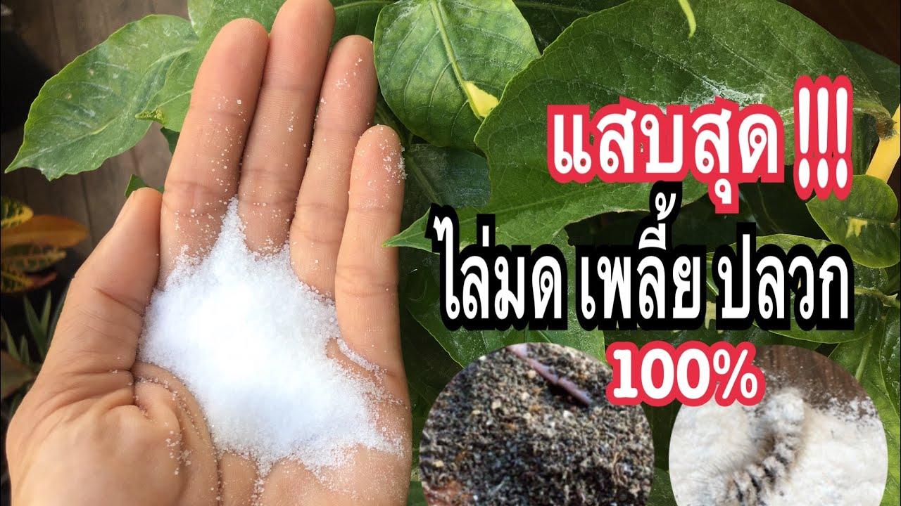 สูตรง่ายมาก!! #ไล่มด #ไล่แมลง บุ้งปลวกยุง มดในดินแบบธรรมชาติเห็นผล100%ประหยัดคุ้มสุดลองดูแม่ก้อยพาทำ